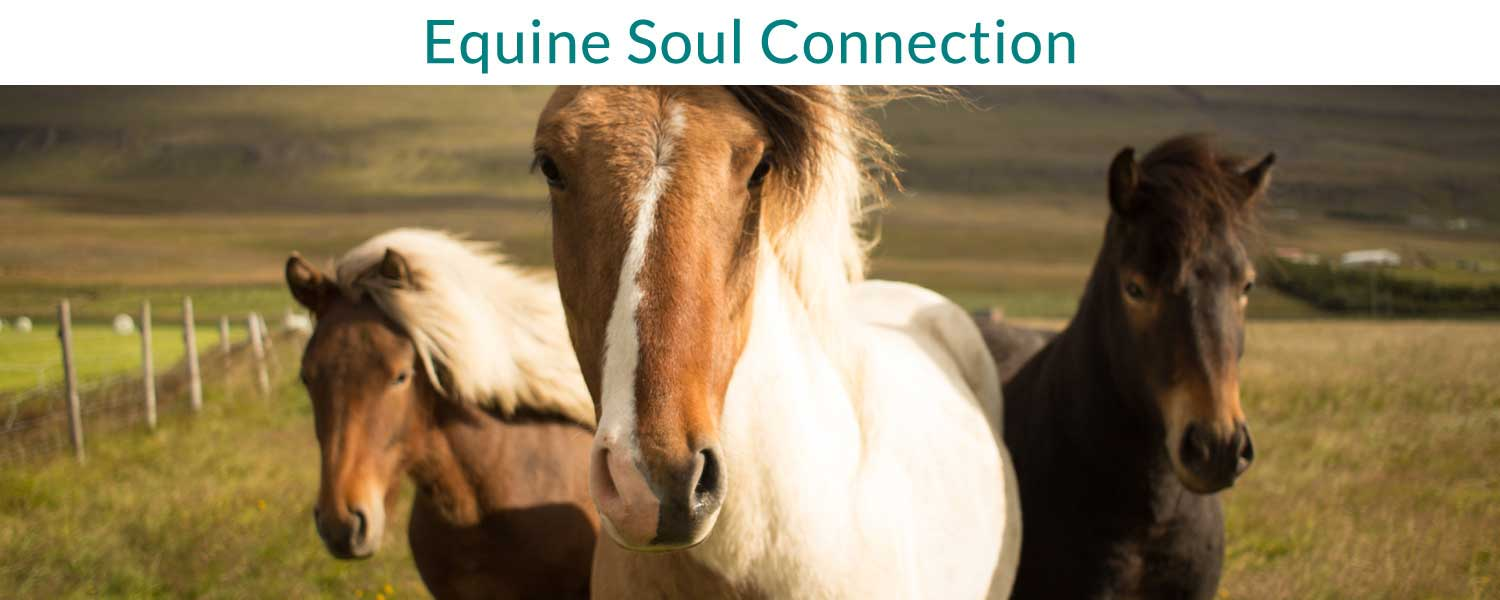 Equine Soul Connection