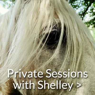 private session with shelley